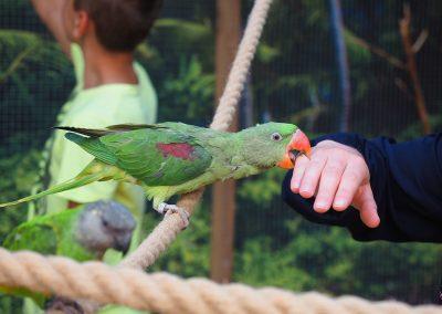 papugarnia-jaroslawiec